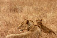 lions_191740
